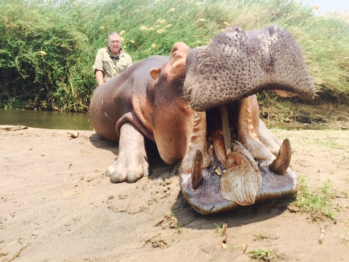 Hippo-6